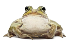 lumpy frog